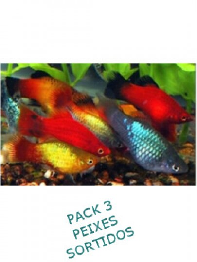 Platy Pack 3 Cores